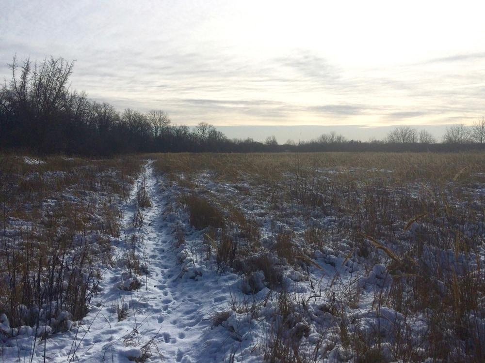 Бег в Голосеевском лесу