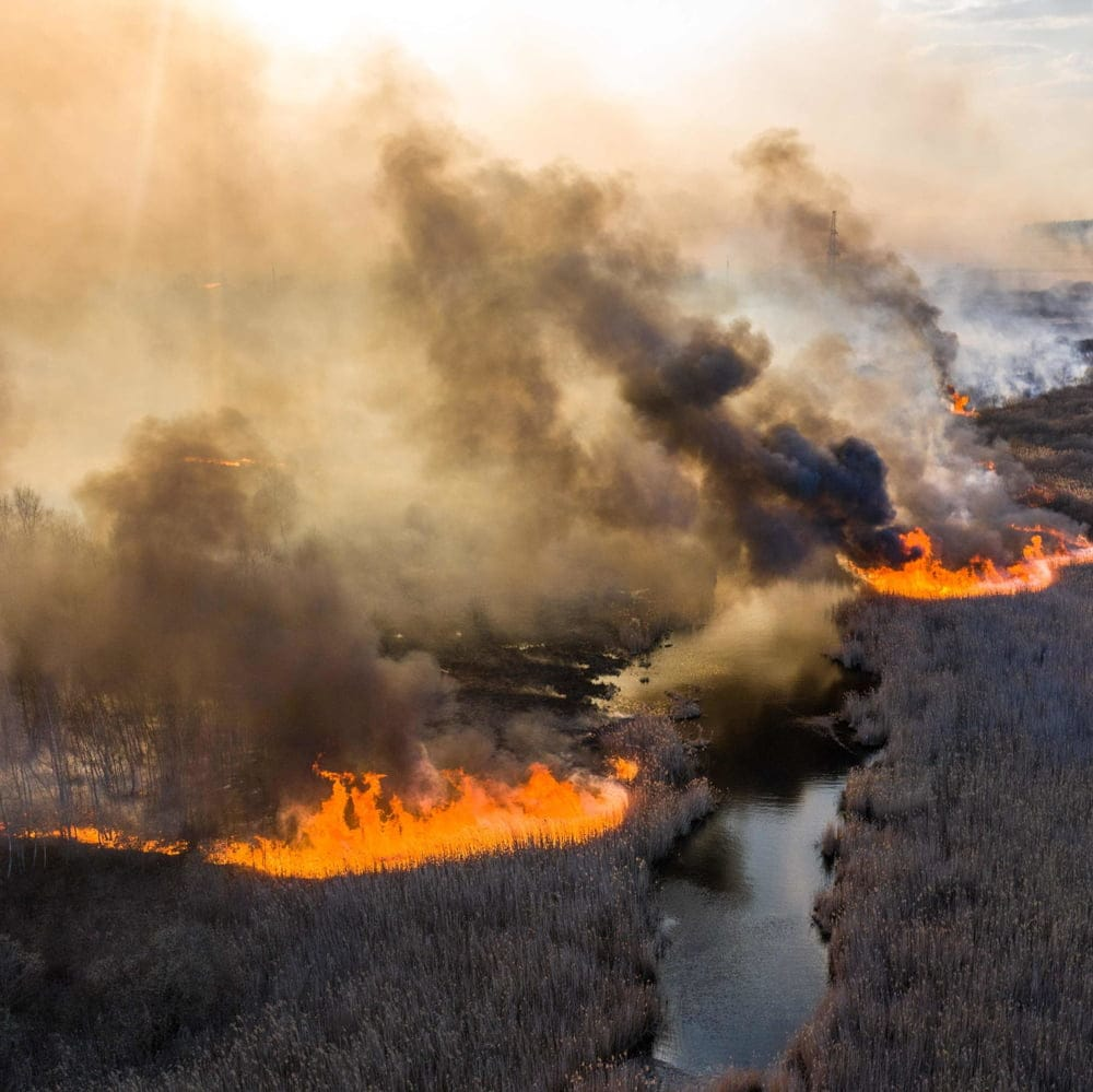 Пожары в лесах Чернобыля (фото - NY Times)