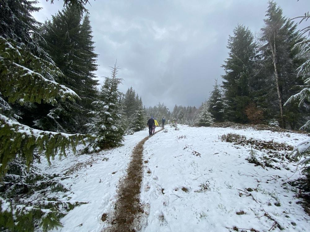 Часть трека Fun Karpaty Dynafit Trail 2021