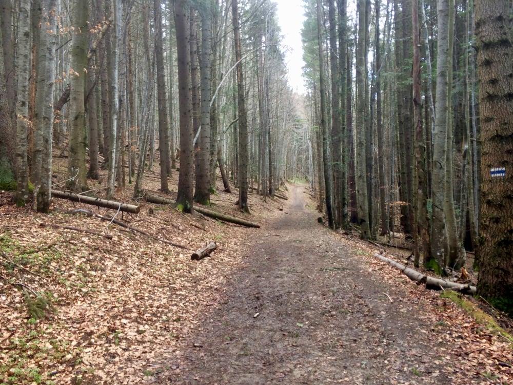 Лес на треке Fun Karpaty Dynafit Trail 2021