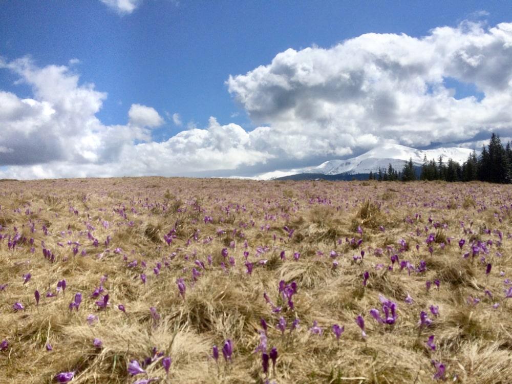 Fun Karpaty Dynafit Trail 2021: когда всё не по плану, но ты доволен 3